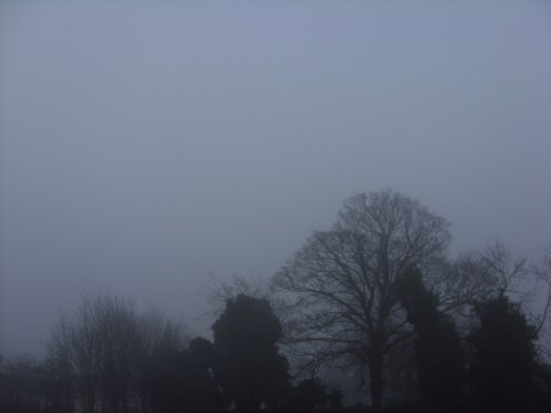 Photo of winter trees in fog